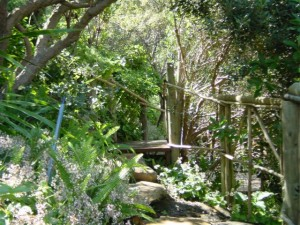 Hout Bay Hideaway - Garden. Guesthouse in Hout Bay Cape Town. Luxury holiday accommodation.
