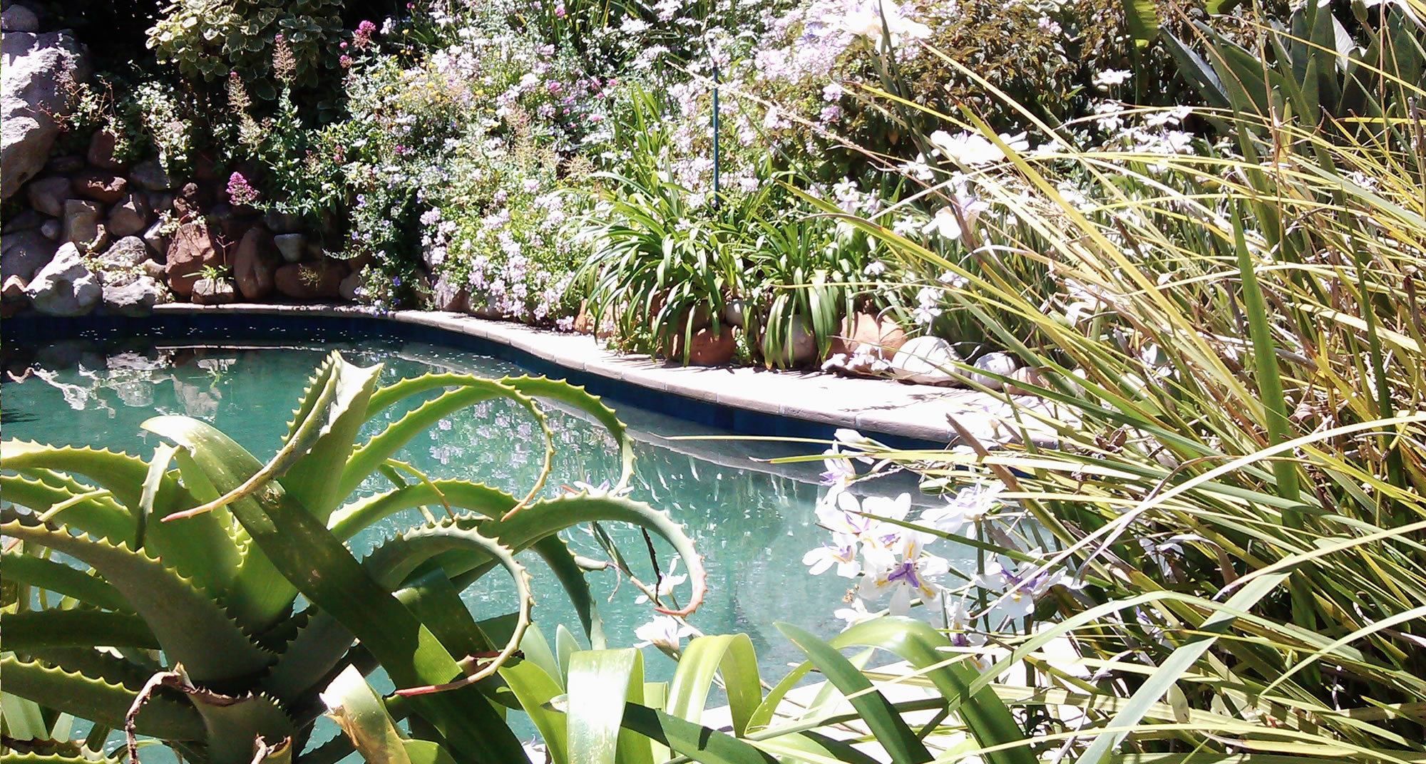 Swimming Pool - The Hout Bay Hideaway